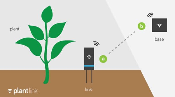 plante connectée 4