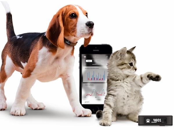 Petbit, le nouveau gadget connecté pour les chiens !