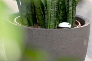 plant sensor koubachi