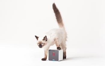 Petcube : une caméra qui a du chien