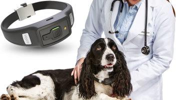 L'Albanometer sait si votre chien est heureux
