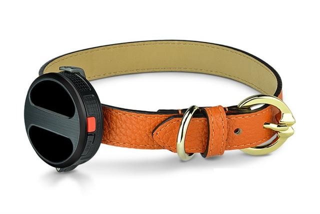 collier Haier pour animaux