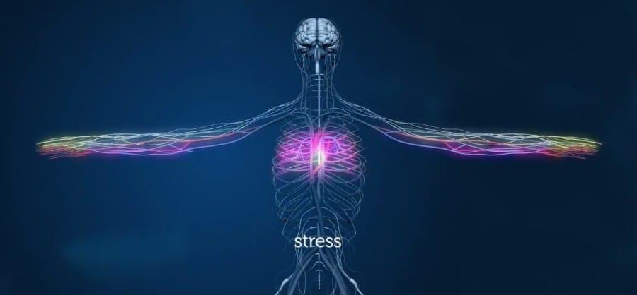 Stress corps humain