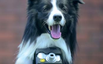 Votre chien deviendra bientôt un «pho-dog-rapher»