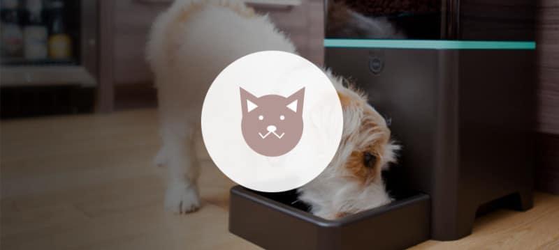 objet connecté animal chien chat