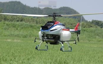 Des drones pour traiter les rizières au Japon