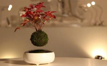 Air Bonsai : Succès immense pour un mini arbre