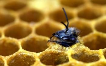 Les objets connectés luttent contre le déclin des abeilles