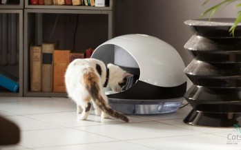 Prendre soin de son chat sans les mains, c'est possible !