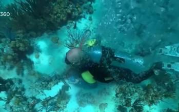 +/- 5 mètres Interactif (docu): plongez sans vous mouiller