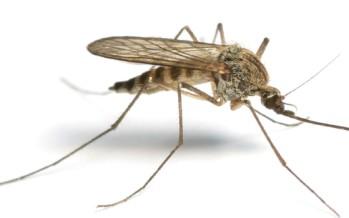 Des Wearables pour réduire l'épidémie Zika