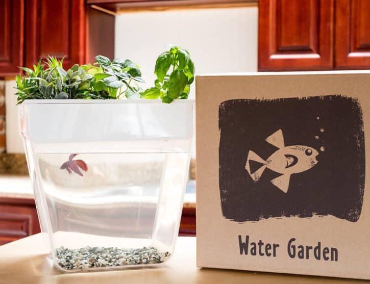 journée mondiale de l'eau, jardin et poisson