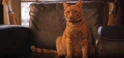 Canhe-Fit : un pendentif pour le bien-être de vos animaux