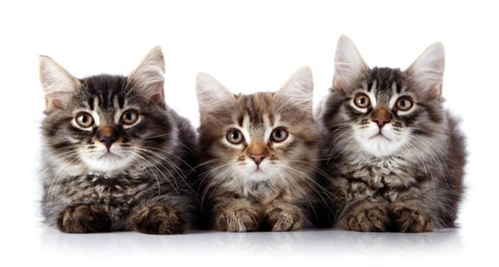 trois chats trop mignons