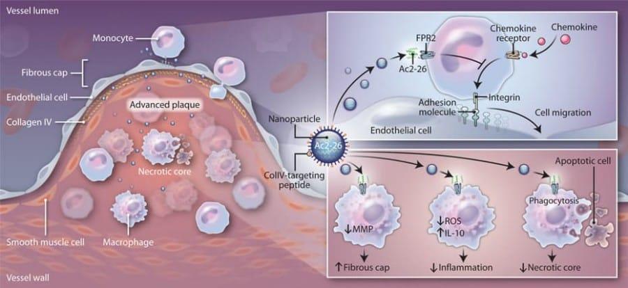 nanorobot nanomedecine 2