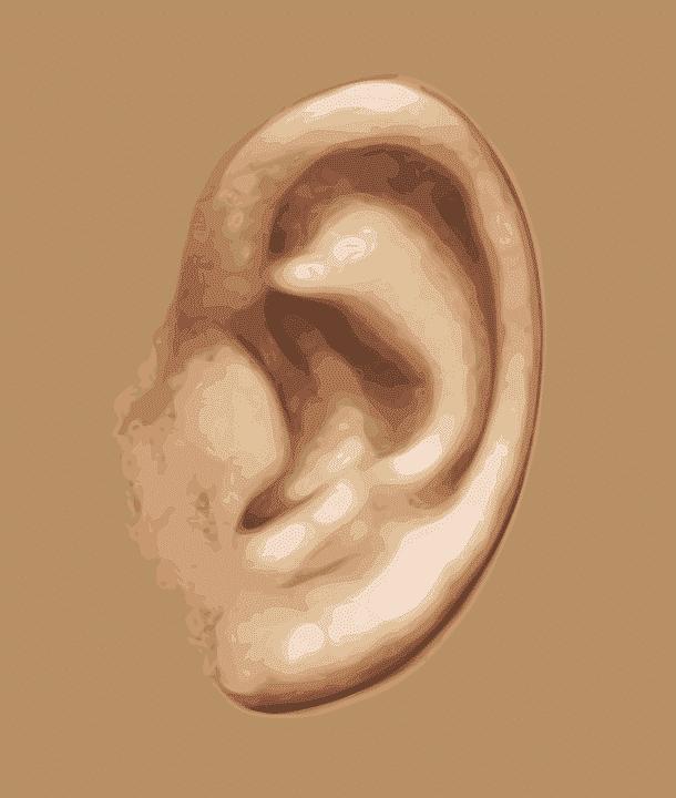 oreille cartilage