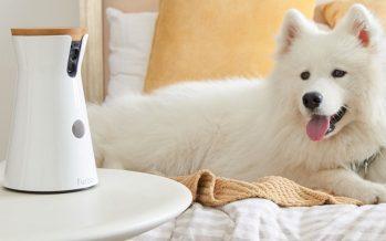 Furbo, l'objet insolite pour rester connecté à votre chien