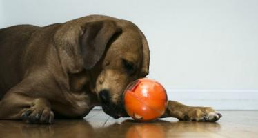 PlayDate, pour jouer connecté avec votre animal