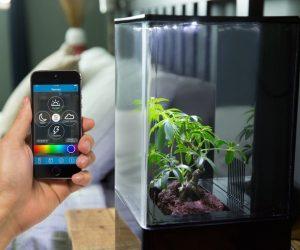 EcoQube Air fournit l'environnement idéal à vos plantations intérieures