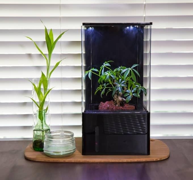 EcoQube serre intérieur