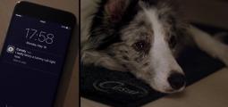 Miss-U-Mat, le paillason connecté qui a du chien