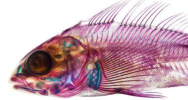 Open source : tous les poissons du monde scannés en 3D
