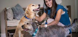 Garmin Delta Smart : un collier connecté pour les chiens sportifs !