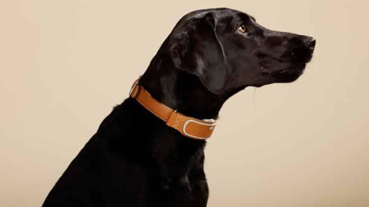 link-akc-collier-connecte-chien