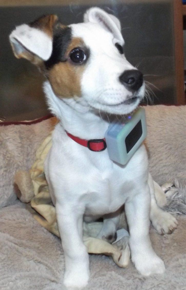 test weenect pets petit chien