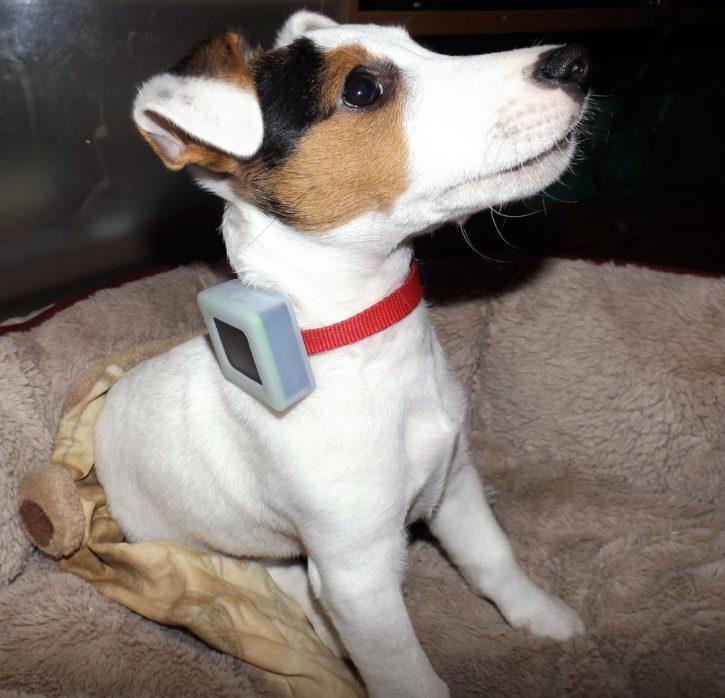 test weenect pets application GPS design petit chien collier balise