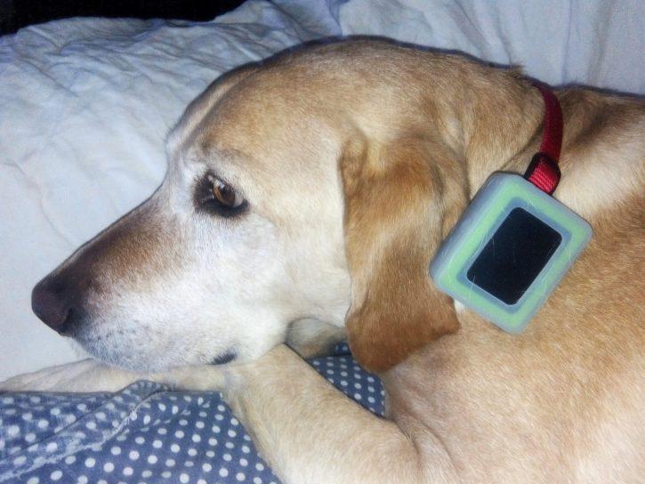 test weenect pets design gros chien