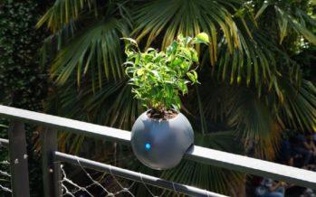 Un pot de fleur connecté, comment ça marche ?