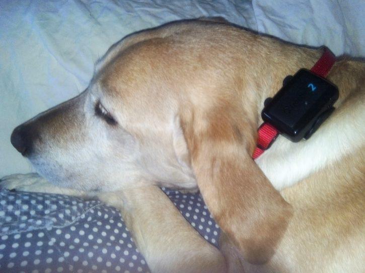 design tractive GPS 2 test collier chien