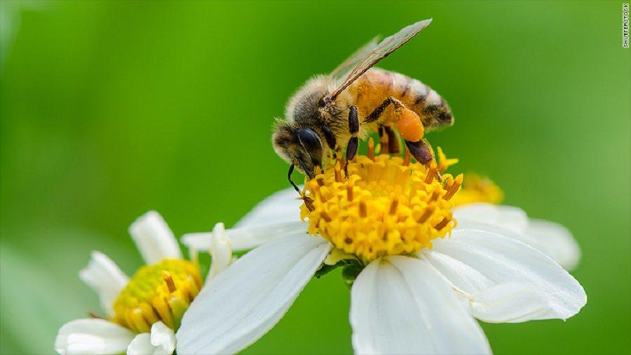 plan bee drone abeille