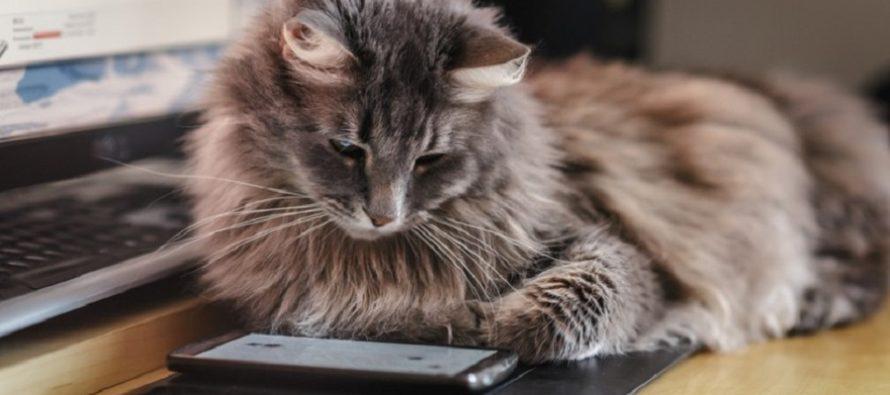 Et si vous optiez pour le chat connecté ?