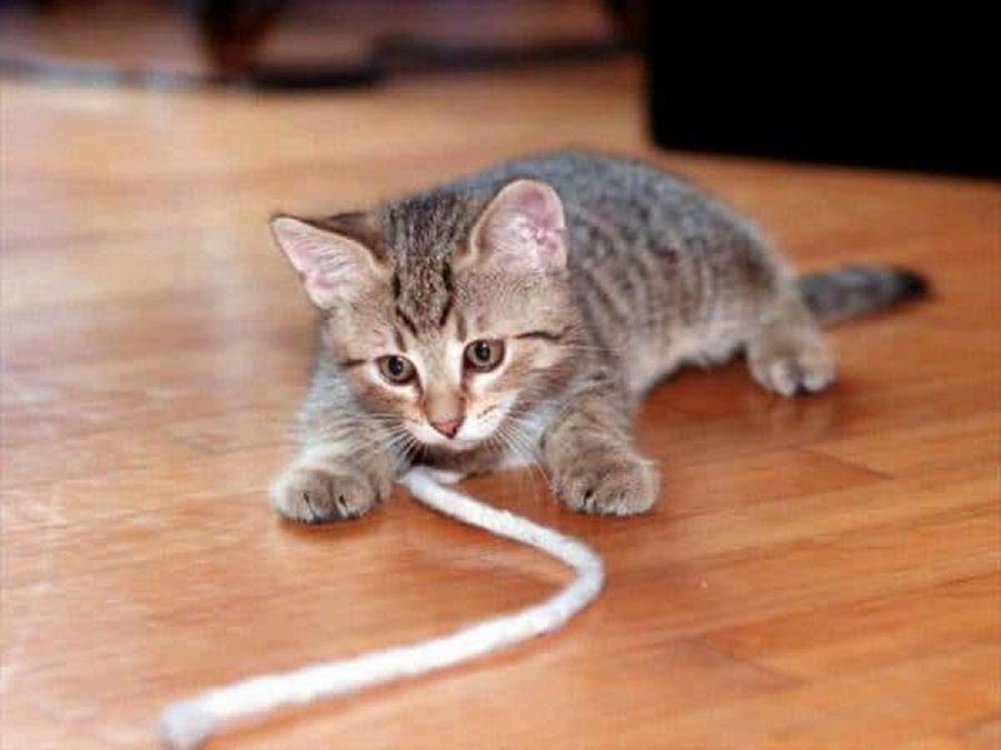 chat connecté jouet