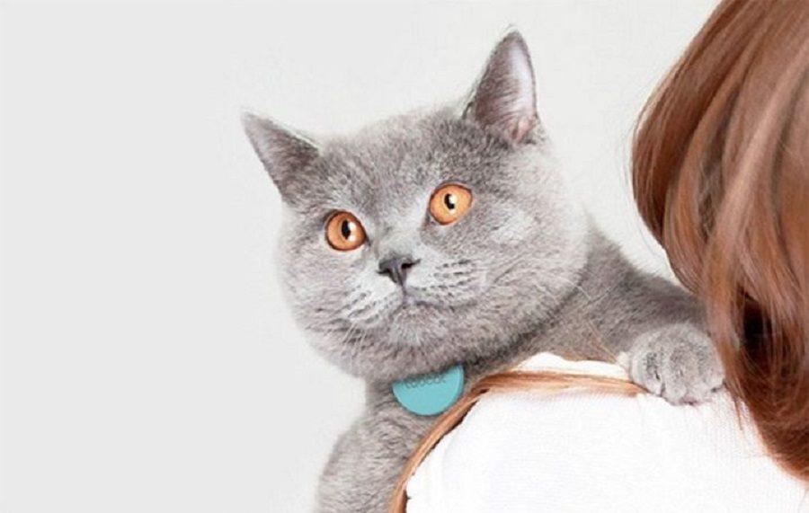 chat connecté collier GPS