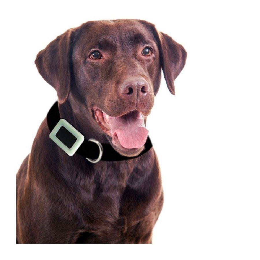 chien connecté collier gps