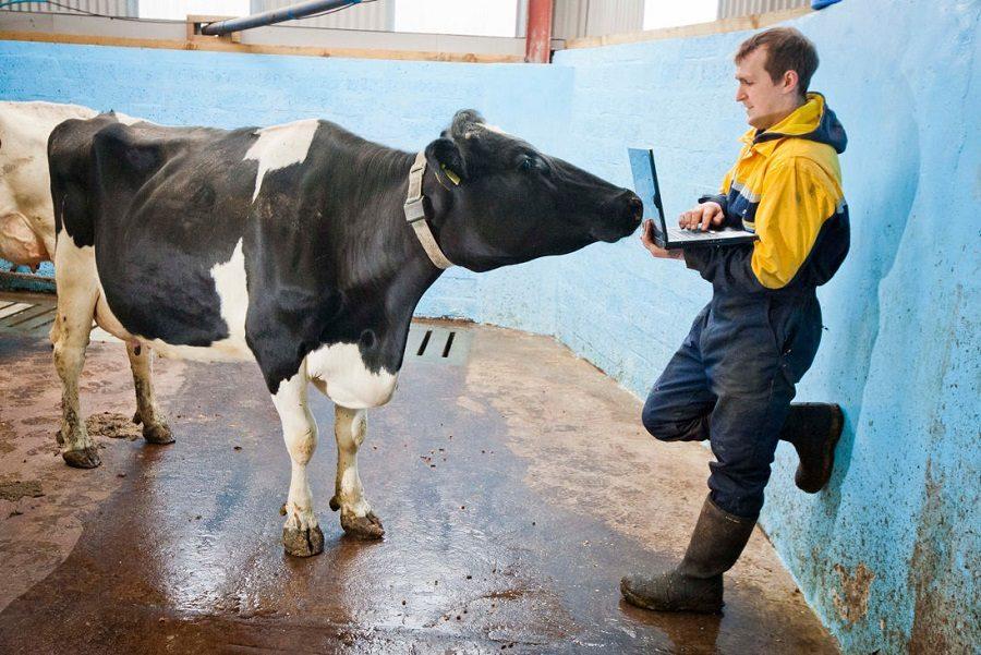 animaux agriculture connectée