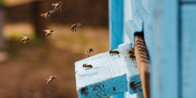 abeille ruche connectée