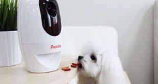 pawbo, jouer pour chien, IFA 2017, tracker pour chien
