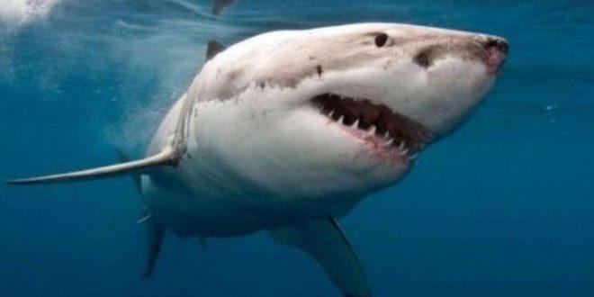 Drones anti requins Australie