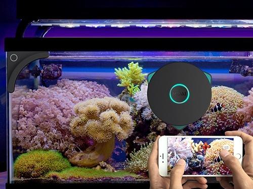 moai un robot nettoyeur et une cam ra pour votre aquarium. Black Bedroom Furniture Sets. Home Design Ideas