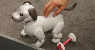 Aibo robot chien