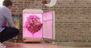 Seedo robot intelligence artificielle pousser cannabis