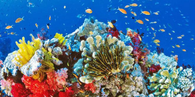Grande barrière de corail robot tueur d'étoiles de mer