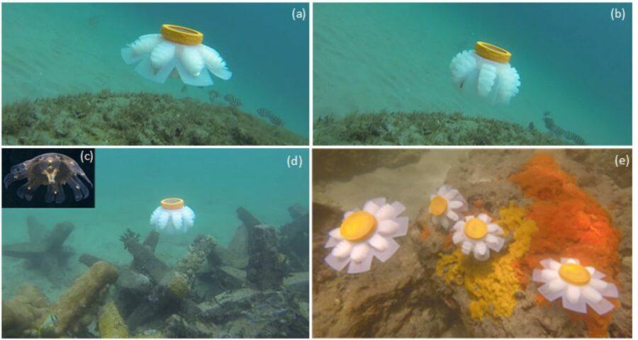 robot méduse récifs coralliens