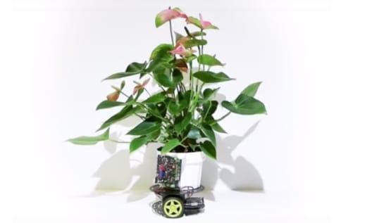 Nouvelle mode: les pots de fleurs intelligents vont changer le monde