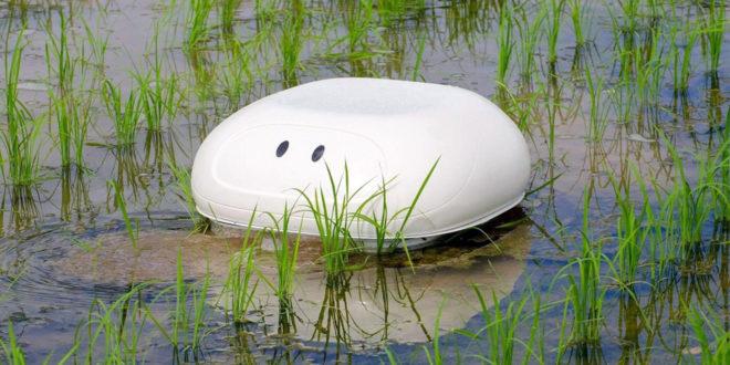 Roboduck, le robot canard désherbant les rizières de Nissan