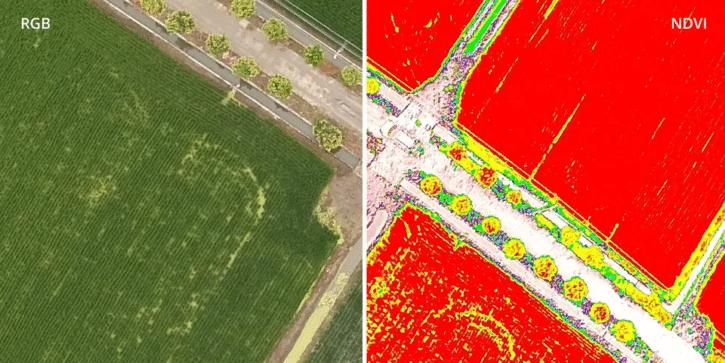 imagerie produite avec le drone DJI P4 Multispectral